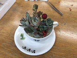 【体験教室】多肉植物寄せ植え教室